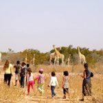 尼亚美美国国际学校的学生去野外看长劲鹿