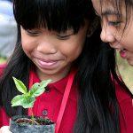 胡志明市德国国际学校的学生观察植物幼苗