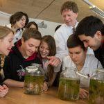 莱辛美国学校的学生观察生物实验结果