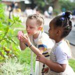 亚的斯亚贝巴国际社区学校的2个小女孩仔细观察和闻花朵